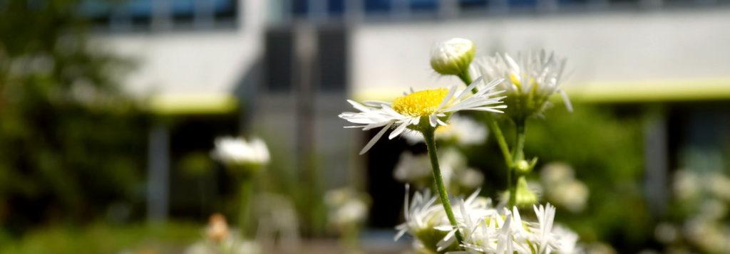Blume vor Schulhaus